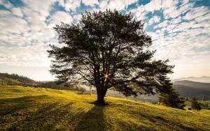 Trees 007